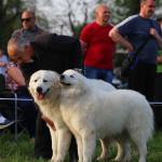 продажа породистых щенков