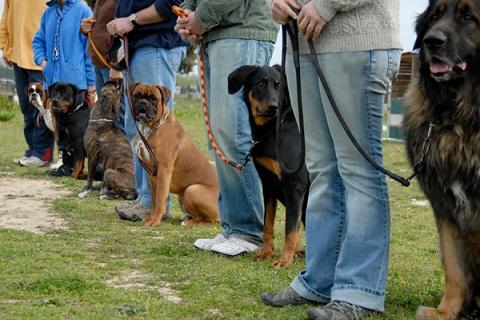 Дрессировка собак в Днепропетровске. Кинолог