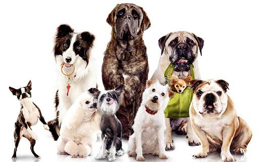 Гостиница для собак в Днепре